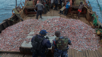 Photo of Enforcement of fisheries laws: An essential means to sustainable fisheries